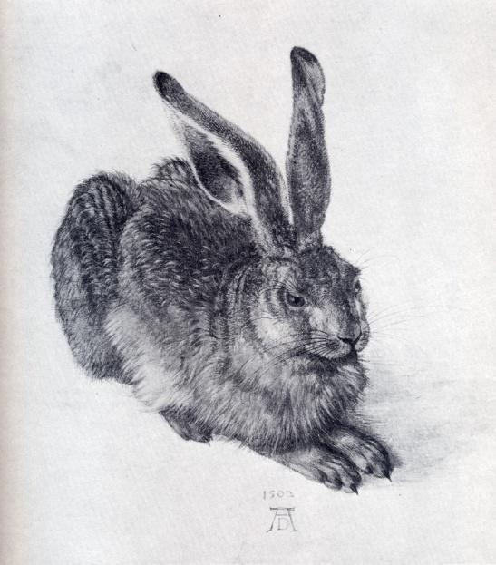 Albrecht D_rer - Young Hare